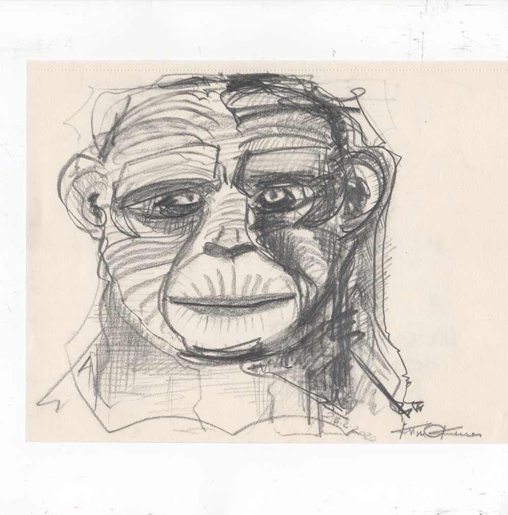 "Pencil drawing, graphit ""Ape Studie"" Kim Okura 2020"